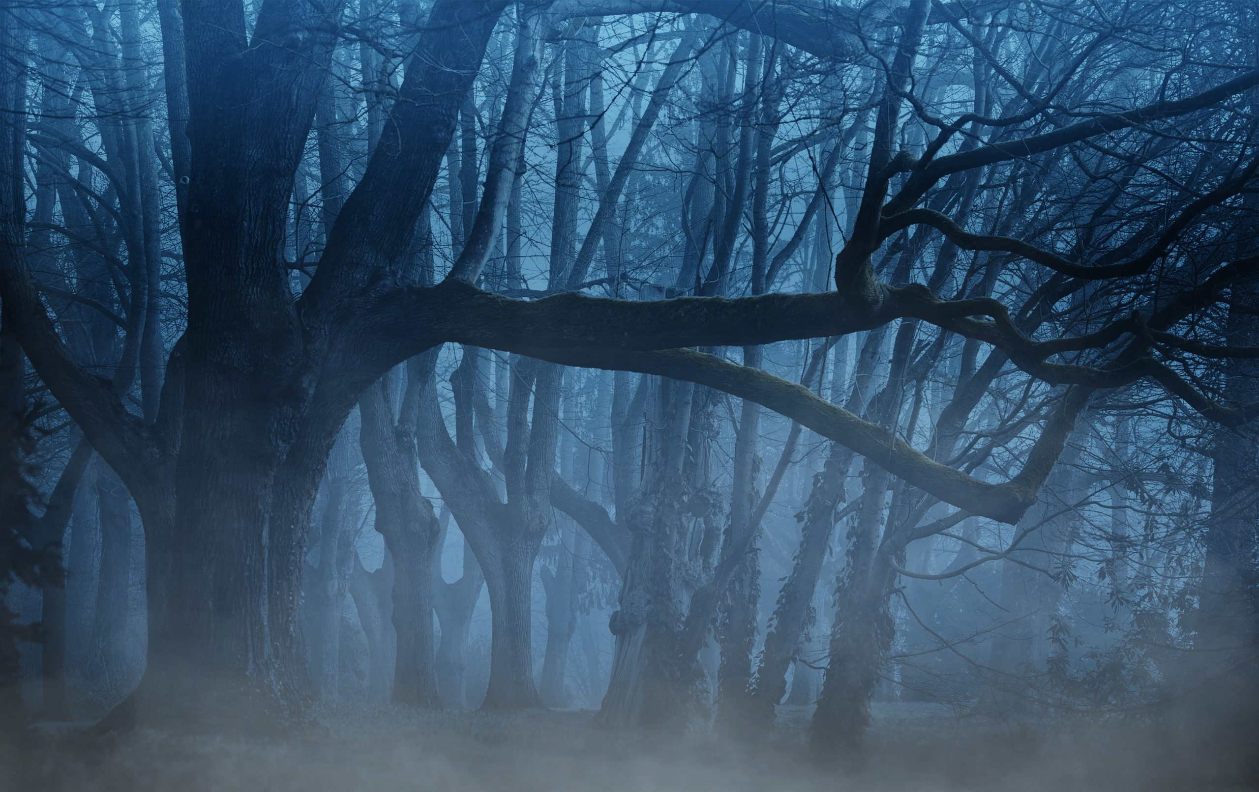 Image by DarkWorkX from Pixabay