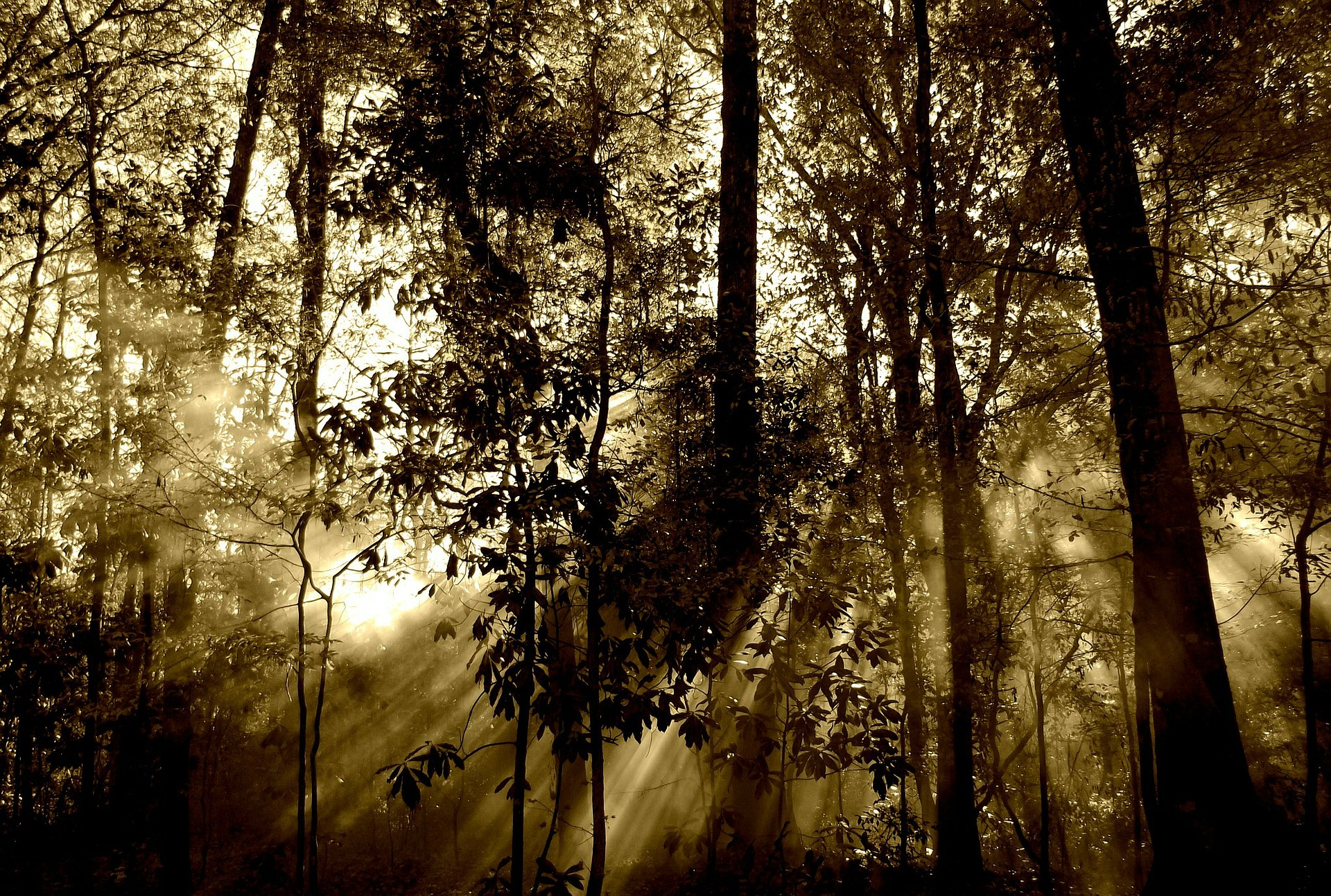 Image by lisa runnels from Pixabay