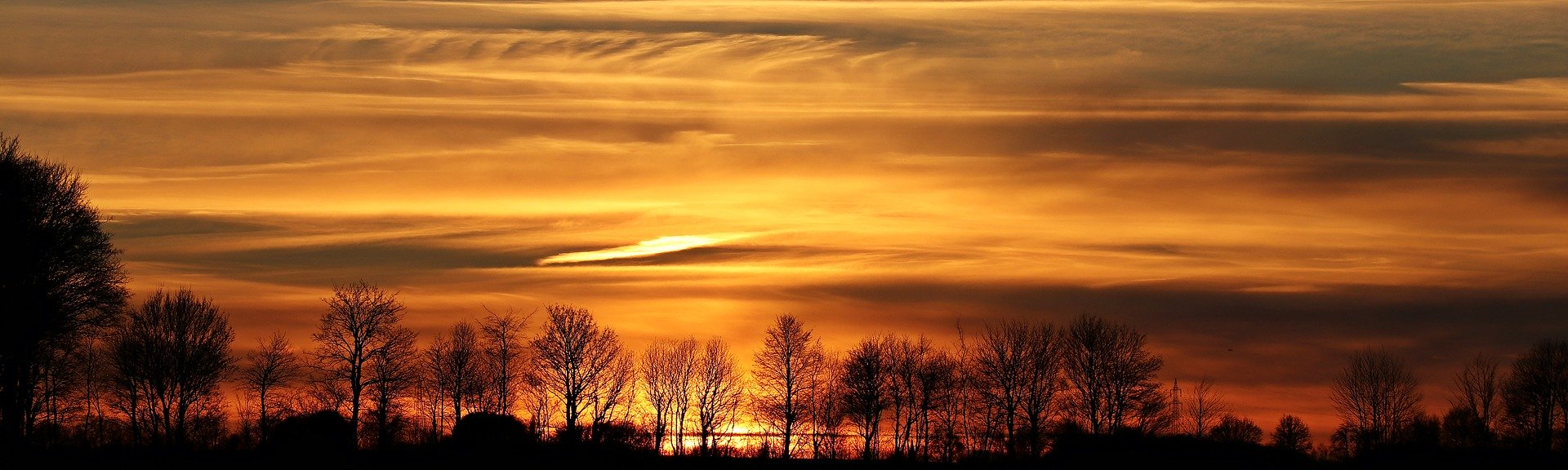 picture of sunset over trees