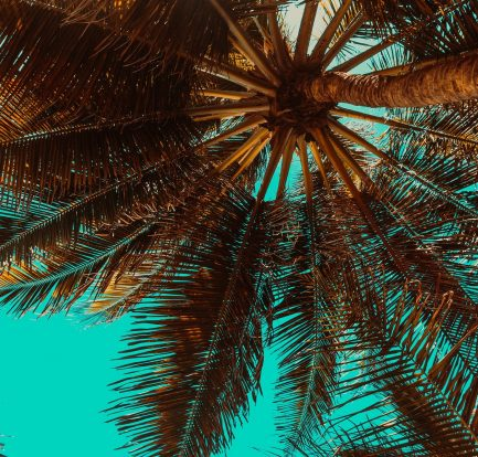 Image by Didio dcc from Pixabay